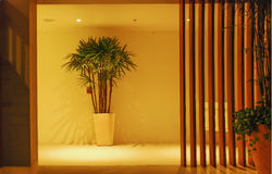Corridor,houseplant and wooden wall Stock Photo