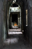 Corridor Khmer temple Ta Prohm. Angkor complex, Siem Reap, Cambodia Royalty Free Stock Photography