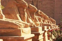 Corridor of Sphynxes, Karnak temple complex, Luxor Stock Photo