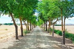 A corridor of trees in the tunnel. Alentejo, Portugal Royalty Free Stock Photography
