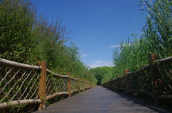 A corridor in the very thick reed marshes Stock Images