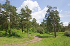 Corridore della foresta fotografia stock