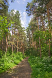 Corridore della foresta immagine stock