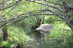 Corriente abajo de los árboles y de las ramas Foto de archivo libre de regalías
