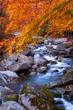 Corriente acrossing el bosque de oro de la caída Imagen de archivo