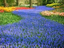 Corriente azul de flores imagen de archivo