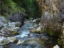 Corriente, bosque, naturaleza pura, Tatras del oeste, Eslovaquia Fotos de archivo libres de regalías
