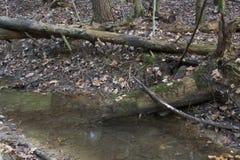 Corriente con los árboles caidos, Ash Cave, Ohio foto de archivo