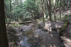 Corriente con los árboles caidos, Ash Cave, Ohio imagen de archivo libre de regalías