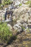 Corriente cristalina en el San Gabriel Mountain Fotos de archivo libres de regalías