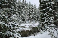 Corriente de la bobina en un día nevoso en junio imagen de archivo libre de regalías