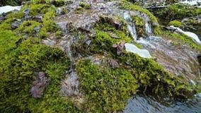 Corriente de la cascada de la c?mara lenta del primer rodeada por el musgo verde y aterrorizado Alto contenido mineral en agua de metrajes
