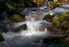 Corriente de la cascada y del bosque Fotografía de archivo libre de regalías