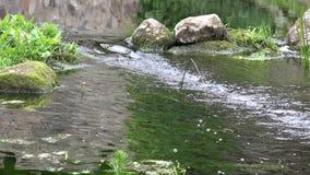 Corriente de la corriente del arroyo del río entre las piedras en parque 4K almacen de metraje de vídeo