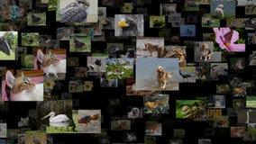 Corriente de la foto del lazo inconsútil de los animales metrajes