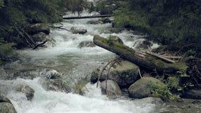 Corriente de la montaña con los rápidos Arroyo misterioso brumoso metrajes