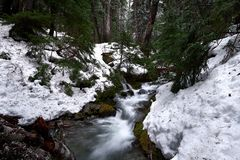 Corriente de la montaña con los snowbanks, árboles imagenes de archivo