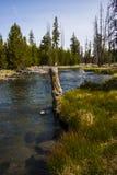 Corriente de la montaña de Oregon Foto de archivo libre de regalías