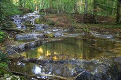 Corriente de la montaña en el bosque imagenes de archivo