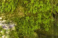Corriente de la montaña en el bosque Foto de archivo