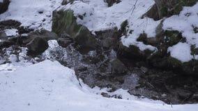 Corriente de la montaña en el bosque con la cascada y la nieve almacen de video