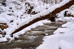 Corriente de la montaña en invierno imagen de archivo libre de regalías