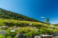 Corriente de la montaña en las montañas de Transylvanian Foto de archivo libre de regalías