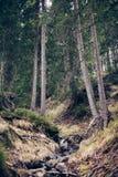 Corriente de la montaña en primavera Fotografía de archivo libre de regalías