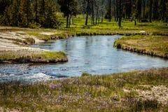 Corriente de la montaña, parque nacional de Yellowstone Imágenes de archivo libres de regalías