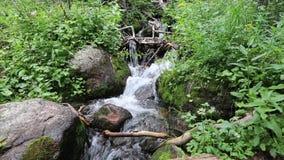 Corriente de la montaña que cae a través de rocas y de plantas almacen de video