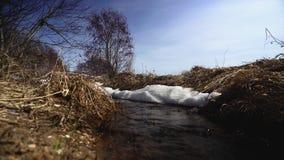 Corriente de la primavera que corre a través de un campo en un día soleado Ladnscape de la corriente, despertando la naturaleza almacen de video