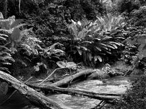 Corriente de la selva Foto de archivo libre de regalías
