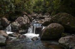 Corriente de la selva, Panamá Imagenes de archivo