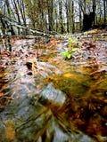 Corriente de la selva virgen fotos de archivo