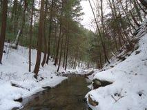 Corriente de la trucha del invierno Imagen de archivo