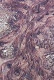 Corriente de las bacterias del parque nacional de Yellowstone fotografía de archivo