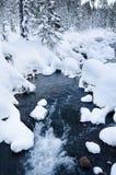 Corriente de Nonfreezing en bosque del invierno Foto de archivo libre de regalías