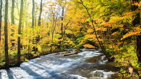 Corriente de Oirase en otoño en el parque nacional de Towada Hachimantai en Aomori, Tohoku, Japón imagen de archivo