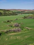 Corriente de serpenteo a través de campos de trigo en primavera Imagen de archivo