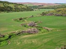 Corriente de serpenteo a través de campos de trigo en primavera Fotos de archivo
