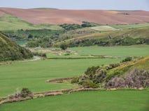 Corriente de serpenteo a través de campos de trigo en primavera Foto de archivo libre de regalías