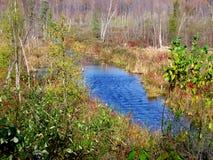Corriente del agua azul en el bosque y las hojas con los diversos colores de las fotos de la Caída-acción Imagen de archivo