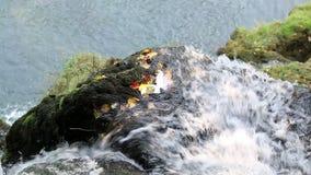 Corriente del agua de la montaña almacen de video