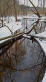 Corriente del agua en bosque Fotos de archivo libres de regalías