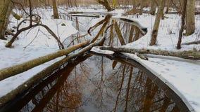 Corriente del agua en bosque Foto de archivo libre de regalías