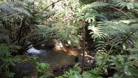 Corriente del agua en las caídas Hawaii del manoa fotografía de archivo libre de regalías