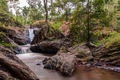 Corriente del agua en medio de árboles Imágenes de archivo libres de regalías