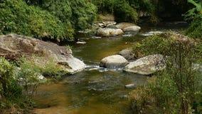 Corriente del agua que espumejea en rocas en una orilla del río por el bosque almacen de metraje de vídeo