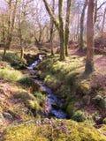Corriente del arbolado de Dartmoor Imagen de archivo libre de regalías