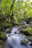 Corriente del bosque de la nube, Costa Rica imagen de archivo libre de regalías
